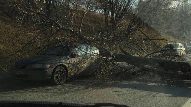 Назападе столицы дерево рухнуло надорогу ипридавило иномарку