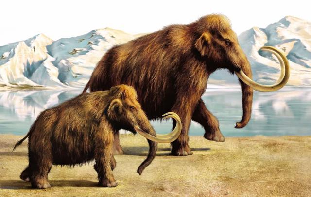 Русские ученые собираются клонировать мамонта