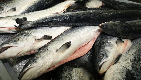 Вмагазинах может появиться залежалая рыба— Россельхознадзор