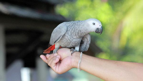 Ваэропорту Тайваня отжары погибли неменее тысячи попугаев