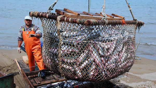 НаКамчатке уже добыто неменее 200 тыс. тонн лосося