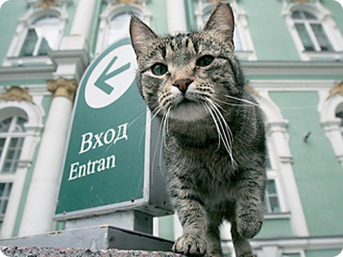 ВПетербурге скажут историю происхождения кота Петра Великого
