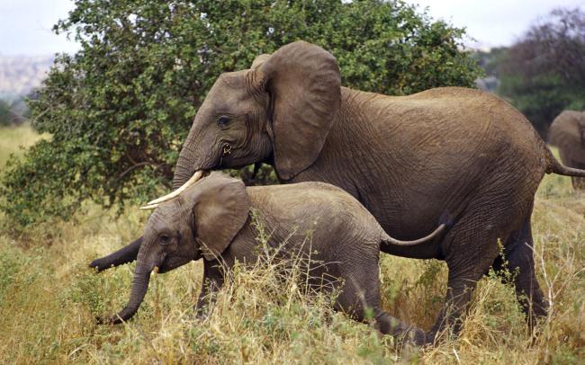 ВИндии поезд сбил семью слонов