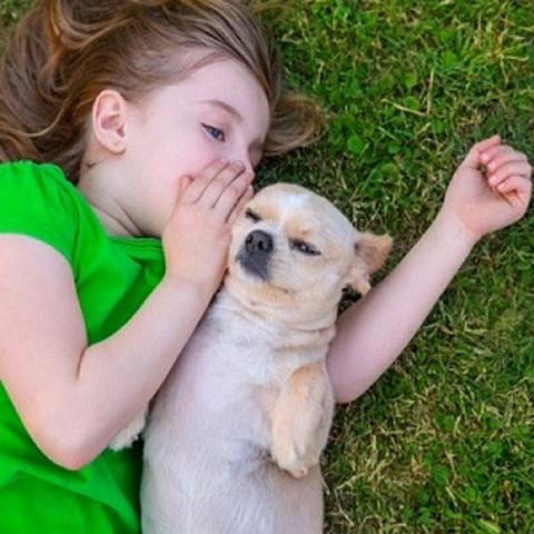 Ученые доказали, что собаки понимают человеческую речь
