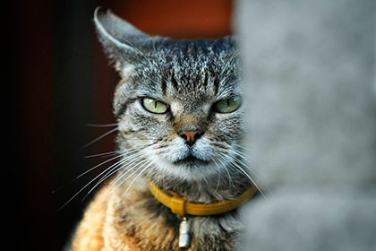 «Ешкин кот» признали матом изапретили врегистрации бренда