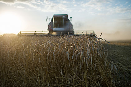 ФАО: РФ вполне может стать мировым лидером поэкспорту пшеницы