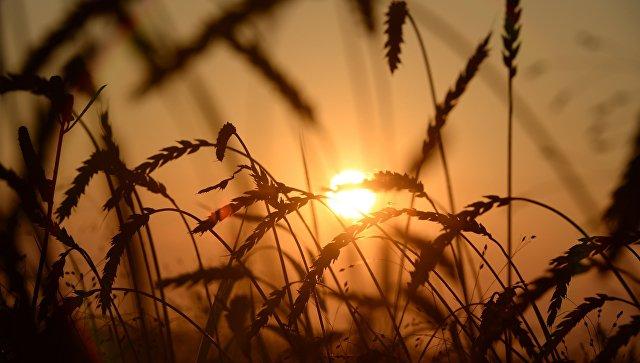 Мадуро объявил опредстоящем подписании договора сРоссией попоставкам зерна