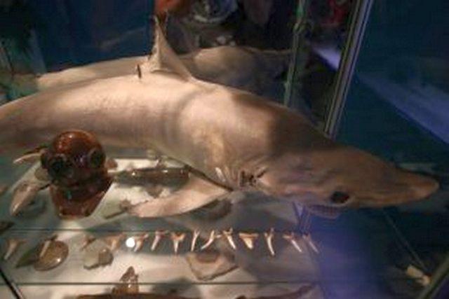 ВМосковском зоопарке выставка акул будет сопровождаться запахами извуками моря
