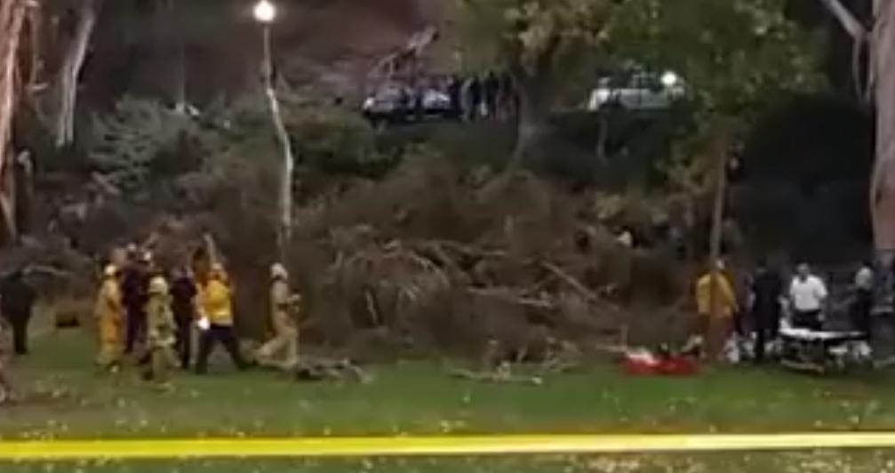Дерево рухнуло насвадьбу вСША иубило гостя