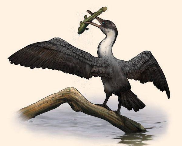 Ученые отыскали вАрктике неизвестную доэтого доисторическую птичку
